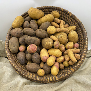 Pommes de terre (ratte, Claustar, Ulysse, Oeil de Perdrix) biologique. Vente directe chez le producteur sud Deux-Sèvres (79)