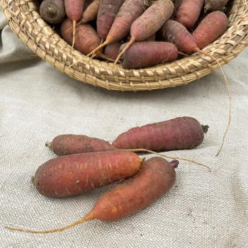 Des petites carottes très gouteuses idéales pour vos plats mijotés et vos tajines de culture biologique (79)