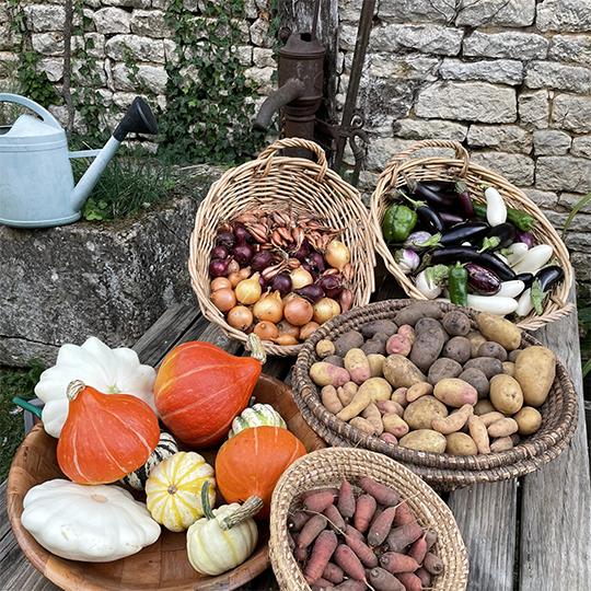 Légumes Bio - Le Potager des Chênes - Les Jardins d'Elsa